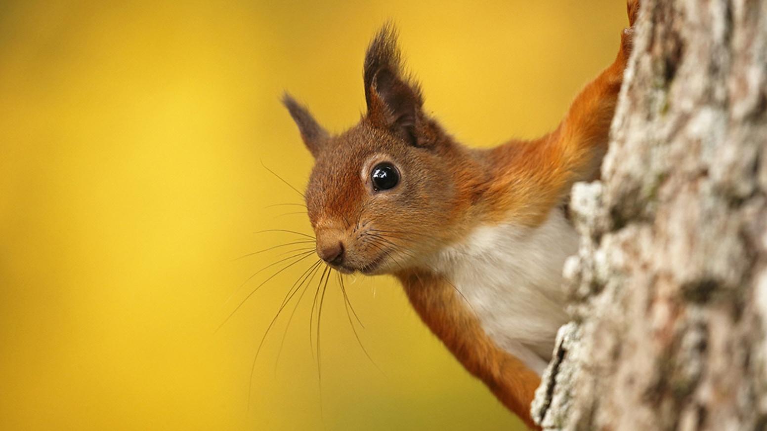 Squirrels And Bats Tonja S Gatherings